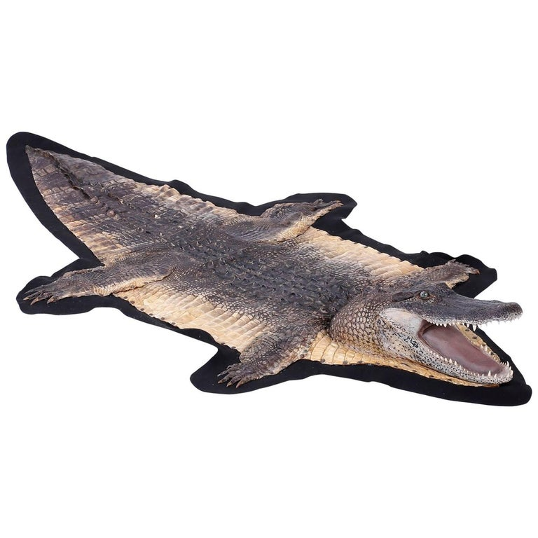 Taxidermy Alligator Rug Or Hide For