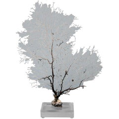 White Sea Fan on Lucite