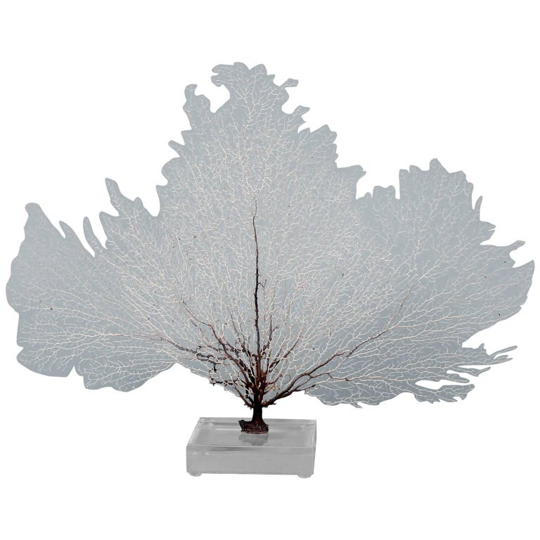 White Sea Fan Mounted on Lucite