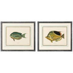 Pair of Fish Lithographs