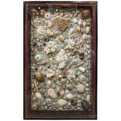 Midcentury French Composition of Corals, Shells and Fossils