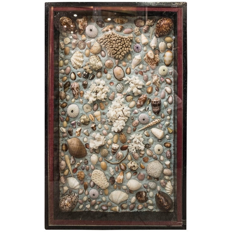 Composition of Corals, Shells and Fossils from France, Midcentury