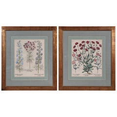 Pair of Early 17th Century Hand-Colored Folio Botanicals by Basil Besler