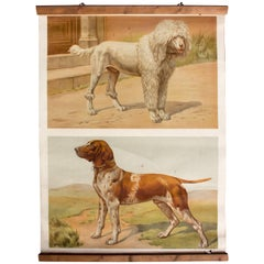 Wall Chart, Dogs, by Th. Breidwiser for Gerold & Sohn, 1879