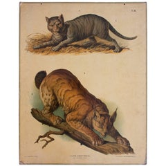 Antique Wall Chart, Cat, F. Gerasch, for Gerold & Sohn, 1879