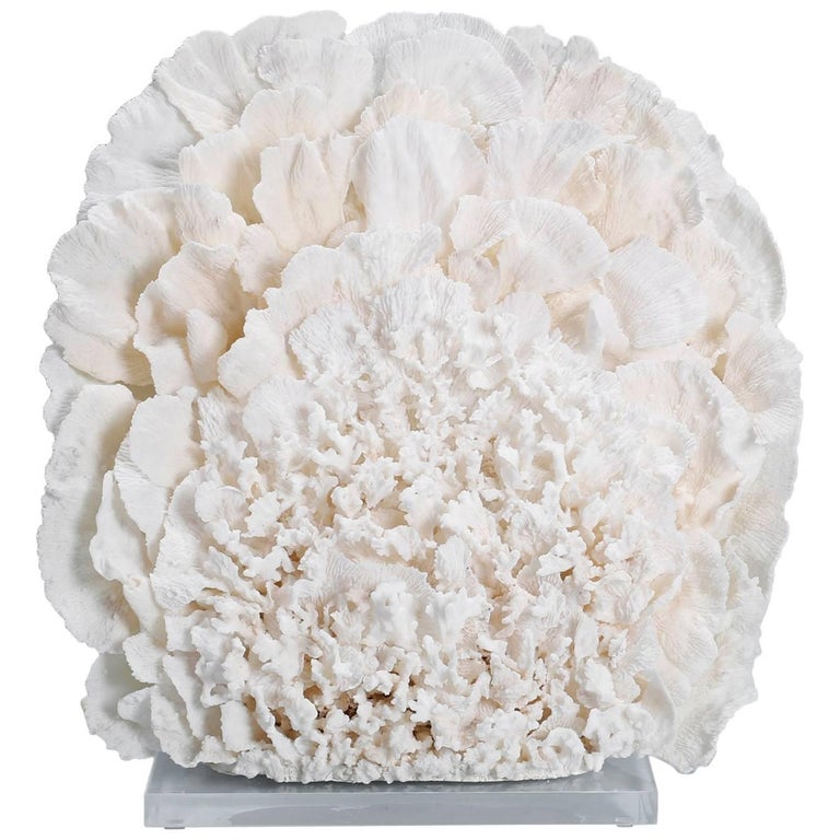 Large Coral Sculpture on Lucite