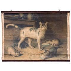 Cats, cat, Antique educational chart , by Herman Leutemann, 1878