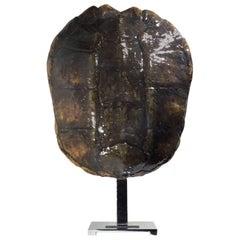 Large Genuine Amricam Frash Water Turtle Shell