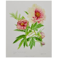 Peony Print by Claire Felloni for Conservatory of Peony France