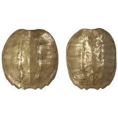 Pair of Bronzed Turtle Shell Sconces from the 1970s, 1stdibs New York