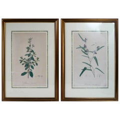 Pair of Framed Botanical Prints by Pierre Joseph Redoute