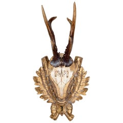 19th Century Roe Trophy of Emperor Franz Josef from Kaiservilla, Austria