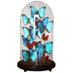 Collection of Domed Butterflies, Blue and Red