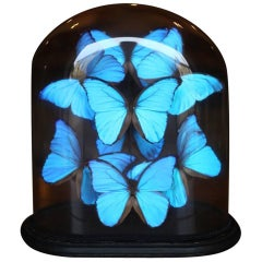 Collection of Domed Butterflies, Blue Morpho