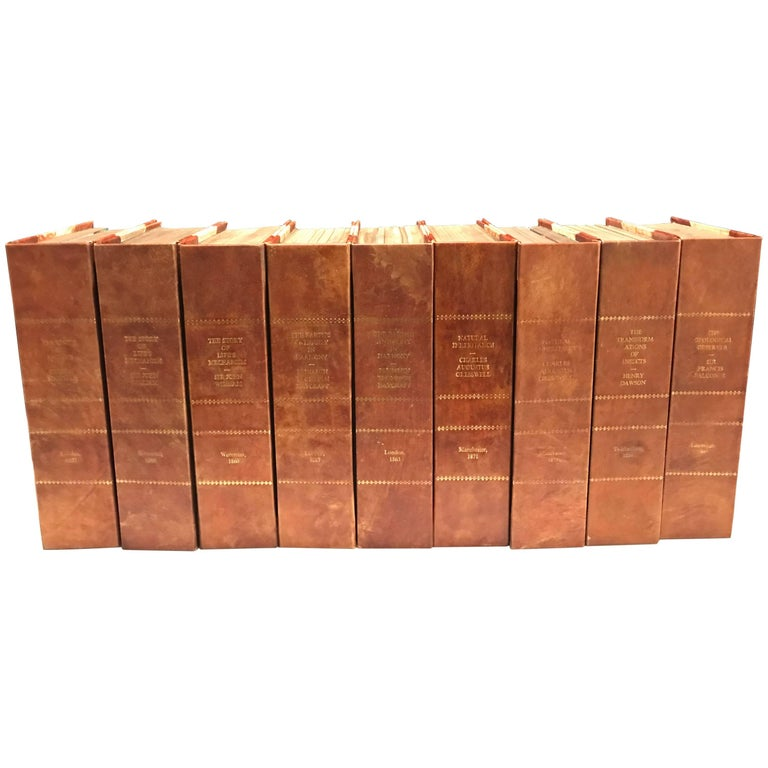 Book Furniture: Nine Large Leather Bound Decorator Faux Books Or Tomes For