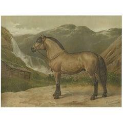 Antique Print of the Norwegian Horse by O. Eerelman, 1898