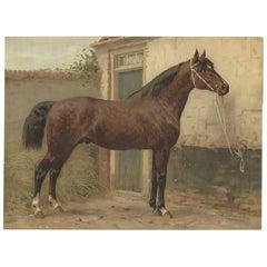 Antique Print of a Norman Horse by O. Eerelman, 1898