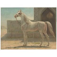 Antique Print of a Persian Horse by O. Eerelman, 1898