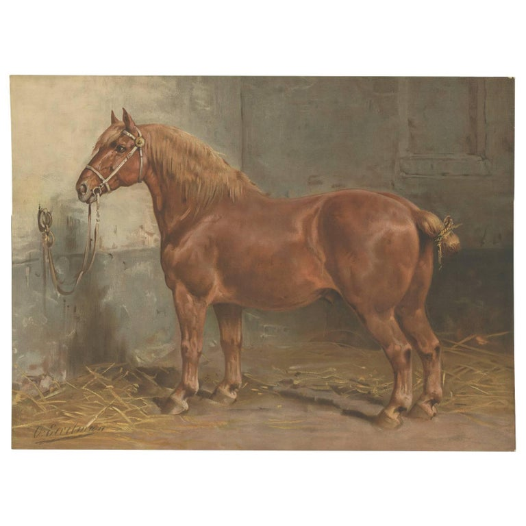 Antique Print of the Suffolk Horse by O. Eerelman, 1898
