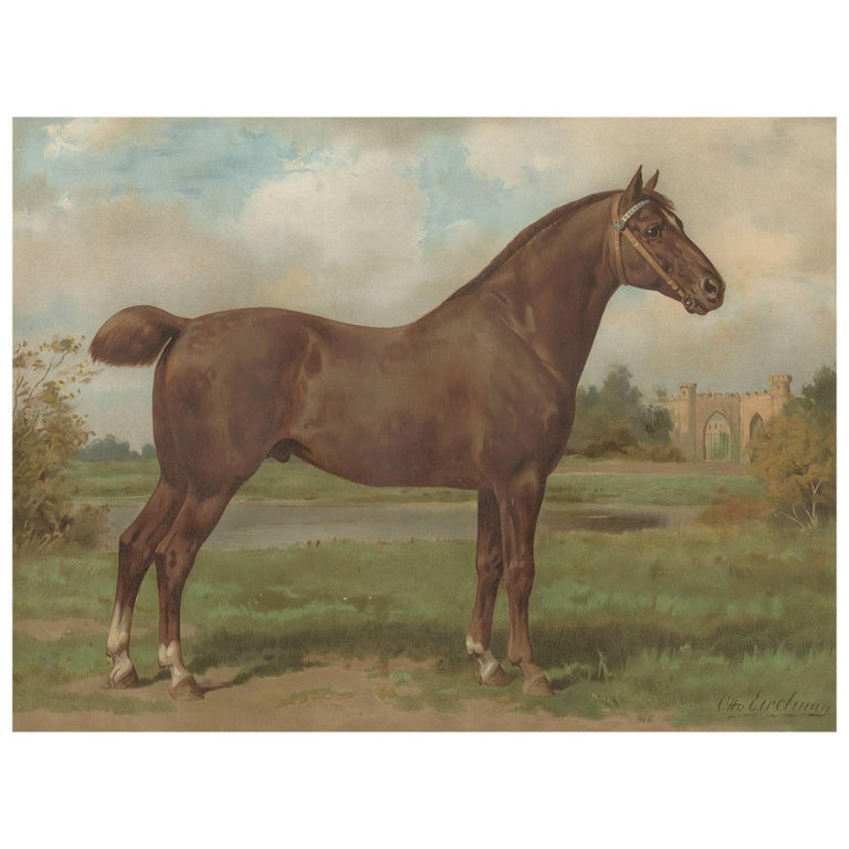Antique Print of the Hackney Horse by O. Eerelman, 1898