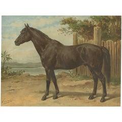 Antique Print of the Australian Horse by O. Eerelman, 1898