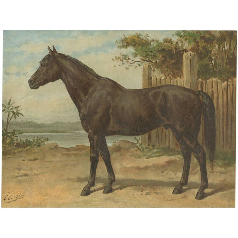 Antique Print of the A...