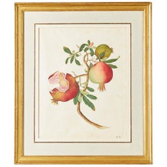 Chinese School Botanical Watercolor of a Pomegranate, circa 1790-1800