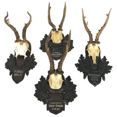 Collection of Four Alps Deer Antler Mounts on Hand-Carved Wood Plaques, Austria