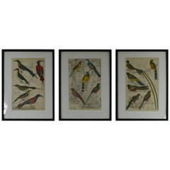 Set of 18 Antique Bird Prints in Faux Bamboo Frames, 1830s