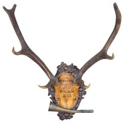 19th Century Austrian Red Stag Trophy of Emperor Franz Josef, Original Hunt Horn