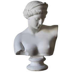 Large 19th Century Plaster Bust by D.Brucciani