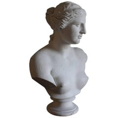 Large Classical Plaster Bust by D. Brucianni