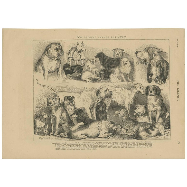 Antique Print of the Crystal Palace Dog Show by the Graphic, 1874