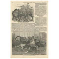 Antique Print of Pigmy Elephants and Lion Cubs, 1854