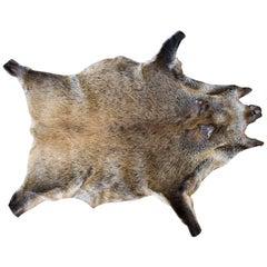 Vintage European Wild Boar Skin Found in France