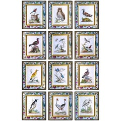 George Edwards Set of Twelve Bird Engravings, circa 1740