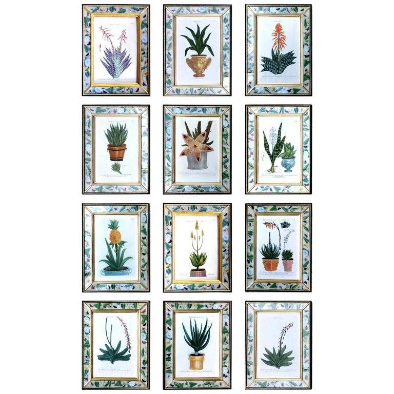 Johann Weinmann Set of 12 Botanical Engravings with Plants in Pots, 1735-1740