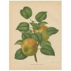 "Antique Print of the Senkyrke Apple ""Sweden"" by G. Severeyns, 1876"