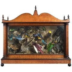 19th Century Victorian Taxidermy Bird Diorama