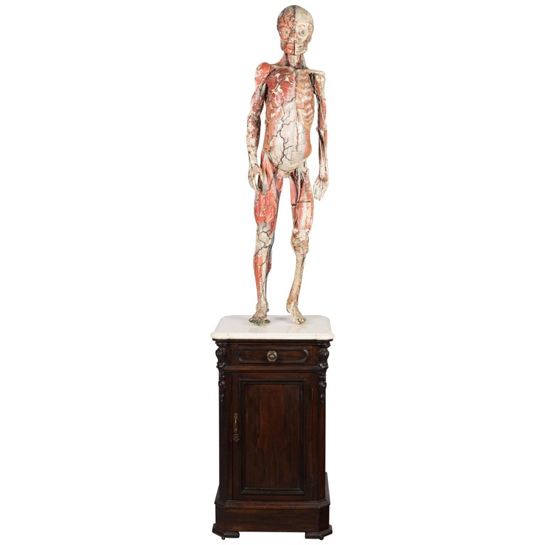19th Century French Anatomical Model by Dr. Auzoux