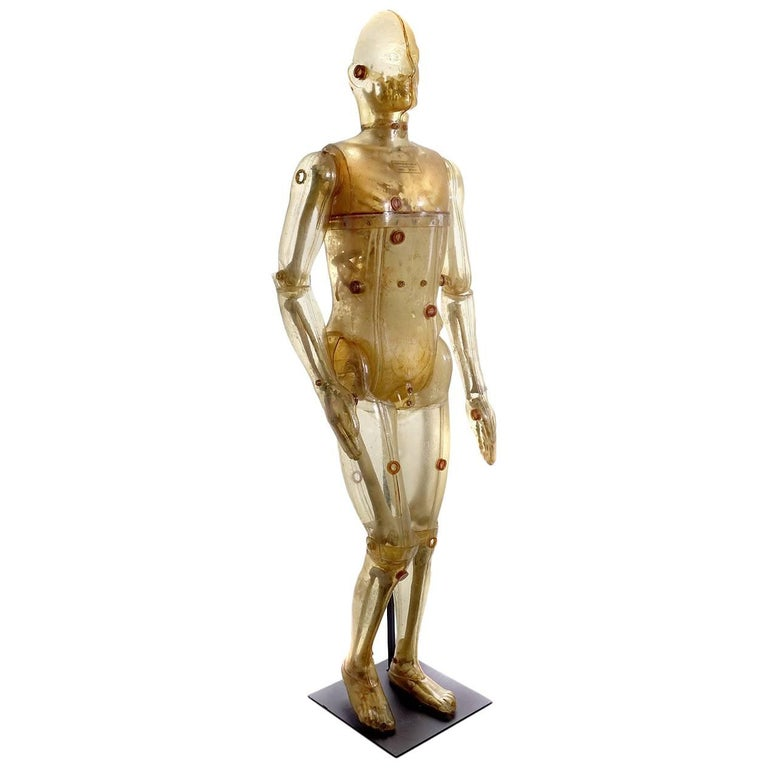 Life Size Articulating X-Ray Dummy, Cold War Icon For Sale
