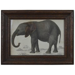 Original Antique Print of an Elephant, 1847