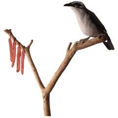 Bird Sculpture Fourtitude Part of the 'Bird Brain' Series
