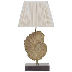 French Ammonite Fossil Mounted as a Table Lamp on a Brushed Steel Base