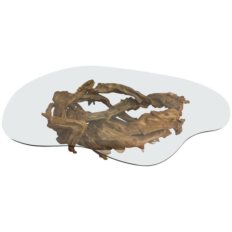 Organic Modern Amoeba Shaped Root Wood and Glass Coffee Table