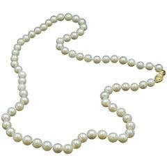 Cream Cultured Pearls Necklace