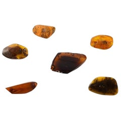 Six Amber Brooches in Different Sizes, Milk Amber and Darker Amber