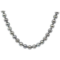 Strand of Freshwater Pearls with 14 Karat White Gold Clasp