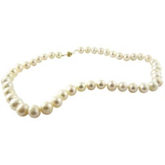 Freshwater Pearl Necklace with 14 Karat Yellow Gold Closure