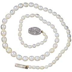 Antique Victorian Natural Pearl Necklace Diamond Clasp Full Cert, circa 1900